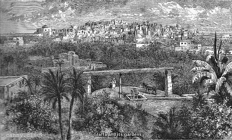 Jaffa and its gardens